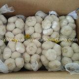 Aglio bianco puro cinese 500g del nuovo raccolto