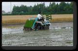 Tipo ambulante macchina del piede della trapiantatrice del riso