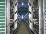 4 capacité des rangées 128 de cage complètement automatique de couche