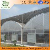 Invernaderos Agrícolas Multi-Span Tipo y Invernadero de Plástico de Tamaño Grande