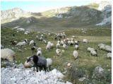 Добавка питания Unigrow для Breeding овец