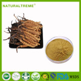 Extrait d'herbes traditionnelles chinoises Cordyceps Aweto
