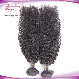 classe 8A nenhum emaranhado nenhum cabelo malaio Curly Kinky de derramamento do Virgin de Afo