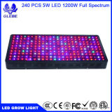 Glebe LED Grow Light 600W Full Spectrum UV IR Plant Grow Lamp para instalações de jardim de estufas interiores Veg and Flowering
