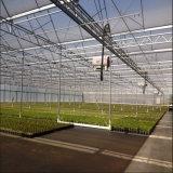Invernadero multi superior de la agricultura de la película plástica del palmo