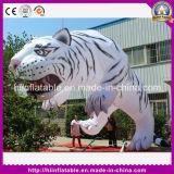 Горячий спорт рекламируя тигра шаржа талисмана случая раздувного