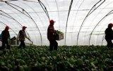 Le légume vert plante des réseaux d'insecte de treillis