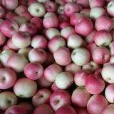 Gala roja dulce fresca Apple de la nueva cosecha