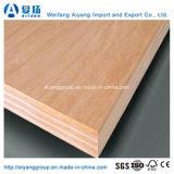 Contre-plaqué commercial du faisceau Okume/Bintangor de bois dur avec la conformité de Carb/Ce