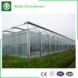 Chambre verte en verre de culture hydroponique de grande taille commerciale