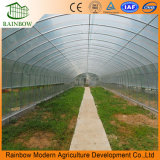 단 하나 경간 또는 다중 경간 플레스틱 필름 농업 온실