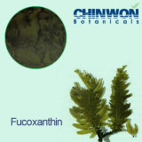 11. Горелки Fucoxanthin 10% -50% выдержки Seaweed Brown тучные