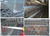 De goedkope Automatische Kooi van de Kip van de Apparatuur van het Gevogelte voor het Gebruik van het Landbouwbedrijf