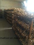 Gengibre seco do ar fresco do gengibre todo o ano