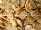 Neues Getreide in Büchsen konservierter Pilz