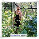 Serra delle serre del giardino per agricoltura