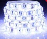 온난한 백색 LED 지구 SMD 5050 IP20 /IP65 DC12V (BQ-SC-Y60M-12)