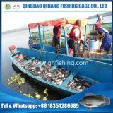 ペルシャ湾のBarramundi文化魚のネットのケージ