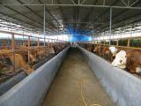 El ganado anti del terremoto levanta el edificio de la estructura de acero