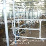 Sala de estar de ordenha de 500 vacas para a vaca de leiteria