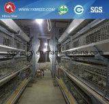 Cage de trappe d'oiseau de poulet/types des pondeuses/de cage de poulet