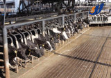 Terminar a linha de processamento maquinaria do Yogurt