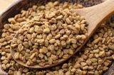 Extrait de graine de fenugrecte 50% -70% Saponines de furostanol pour l'amélioration masculine