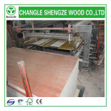 18mm Phenolic Poplar Plywood für Decoration und Furniture