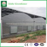 野菜のためのプラスチック農業の温室