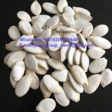 Семена тыквы кожи Shine HPS органические
