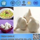Pressa di aglio cinese del commercio all'ingrosso dell'aglio di prezzi dell'aglio