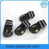 Únicos zapatos antirresbaladizos rugosos del perro corriente del animal doméstico para ir de excursión