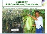 Condizionatore del terreno di Unigrow per la verdura fogliare, la zucca amara e la pianta fiorita bianca della zucca