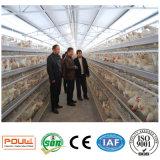 Cage galvanisée plongée chaude de vente chaude de poulet de couche pour l'exploitation d'élevage (un type bâti)