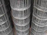 El PVC de la alta calidad cubrió la cerca soldada galvanizada del acoplamiento de alambre