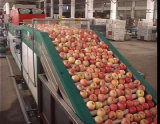 Große verwendete industrielle Obst- und GemüsePinsel-waschende Maschinerie