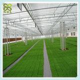 식물성 톱니 기후 통제 다중 경간 온실