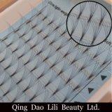 Sferze libere 2017 del gruppo di terminali del nodo di bellezza di Lili con 0.05-0.20mm Dcurl per l'estensione pre fatta del ciglio del volume 10d