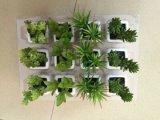 Piante e fiori artificiali della pianta succulente Gu-Jys-00040