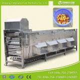 Tipo comercial máquina do rolo de classificação dos citrinos de Apple da uva-do-monte