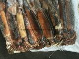 Meer gefrorener Illex Kalmar für Verkauf