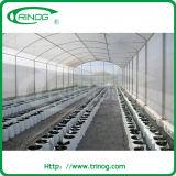 Invernadero plástico del solo palmo para el Seeding