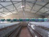 Struttura d'acciaio per la Camera del pollame con strumentazione automatica