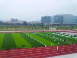 サッカー競技場のための屋外の総合的な泥炭