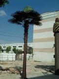 トンコワンの熱い販売のAritificial Washingtonia Filiferaの木