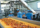 専門ジュースの生産のターンキーのプロジェクト