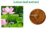 Gewicht-weniger natürliches Lotos-Blatt-Auszug Nuciferine 2% 10:1