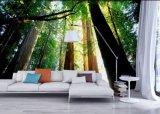 Murales autos-adhesivo de interior populares respetuosos del medio ambiente de la pared del paisaje del árbol forestal