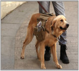 Saddlebags da mochila da trouxa do cão da lona para o cão médio & grande