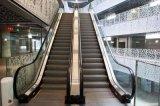 Sûreté et Somme-Ascenseur d'intérieur stable d'escalator